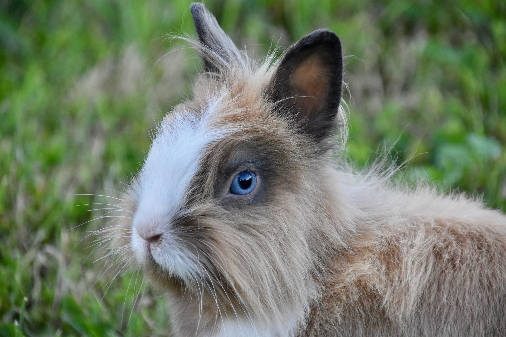 mooi konijn