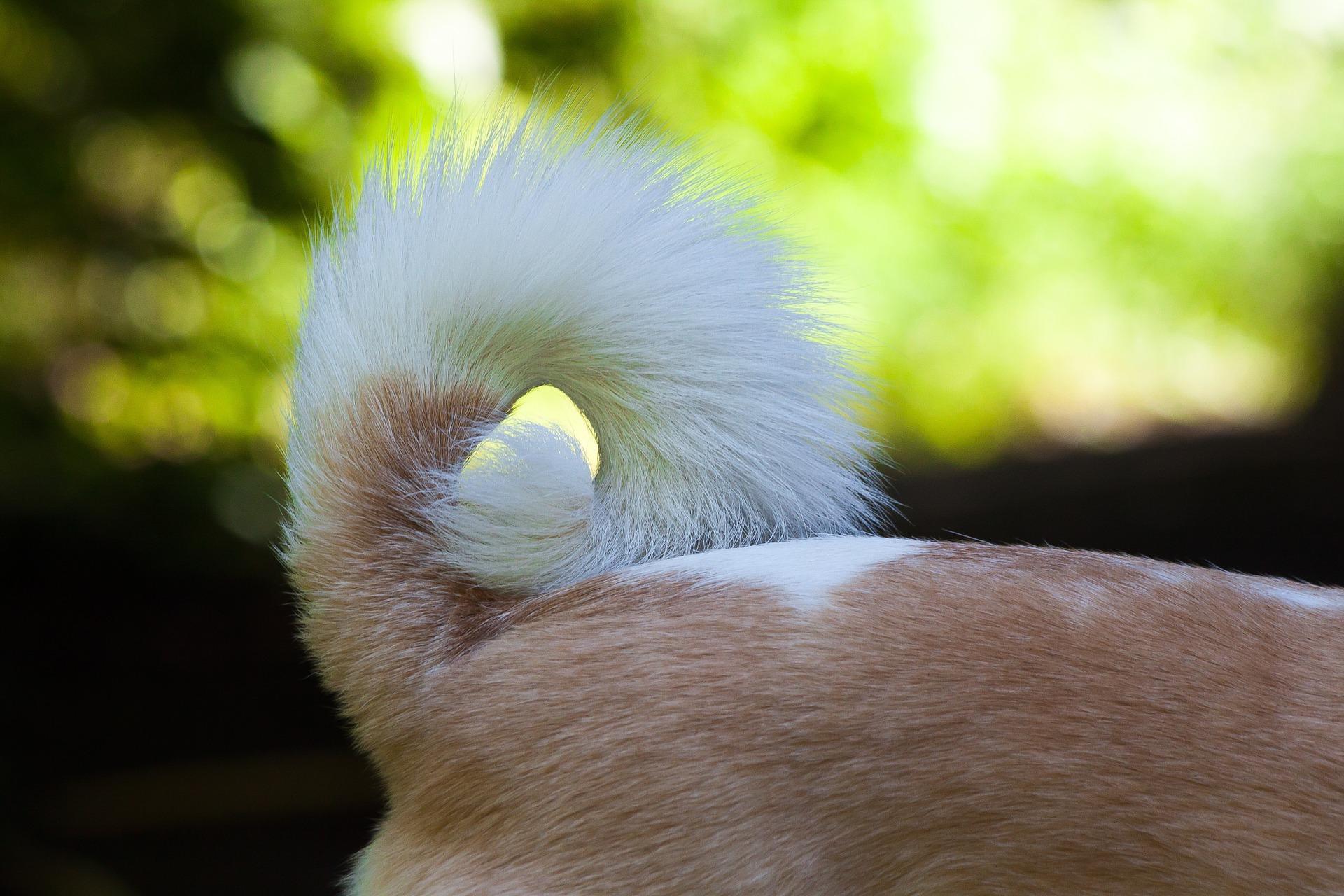 tail-1480893_1920